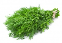 Aneth - Herbes aromatiques
