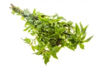 Menthe - Herbes aromatiques